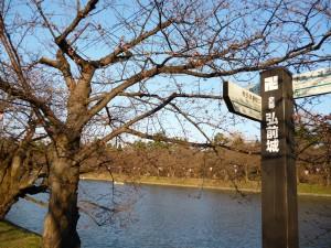 弘前公園4.28-1