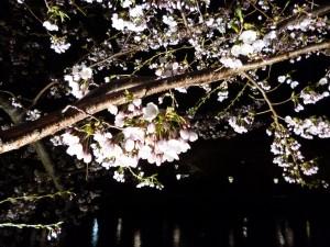 弘前公園5.3-1