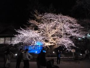 弘前公園5.5-1