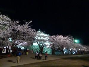弘前公園5.7-3